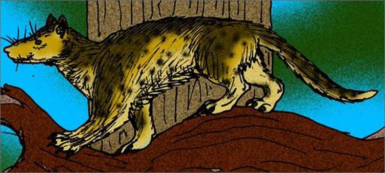 предок-кошек-миацид