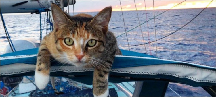 кошка-путешествует