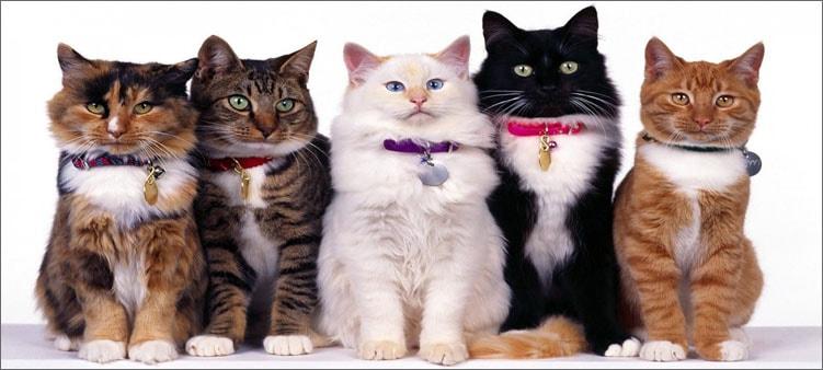 разные-кошки