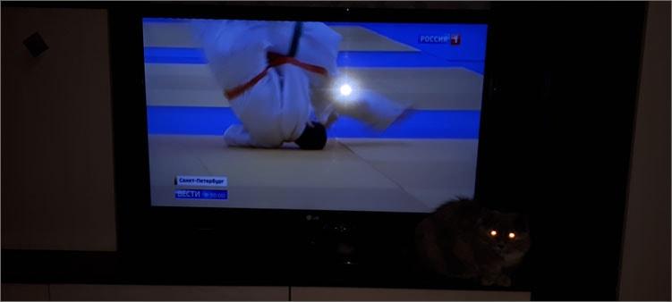 телевизор-и-кошка