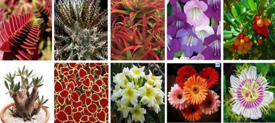 Картинки по запросу картинка растения мира