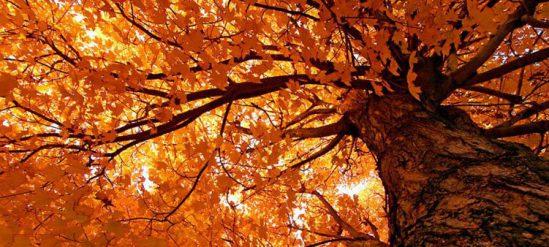 Доклад почему желтеют листья осенью 3858