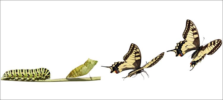 Превращения бабочки