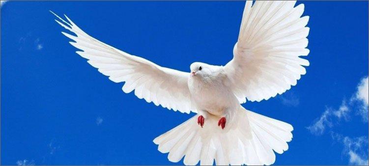 белый-голубь-на-фоне-голубого-неба