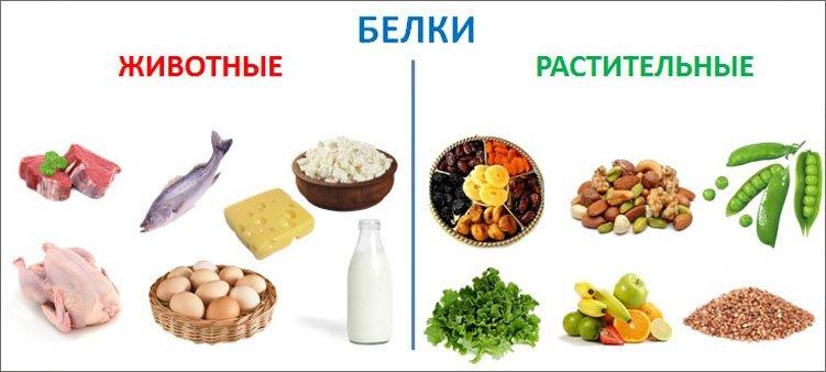 источники-белков-животных-и-растительных