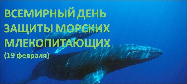синий-кит-плывет