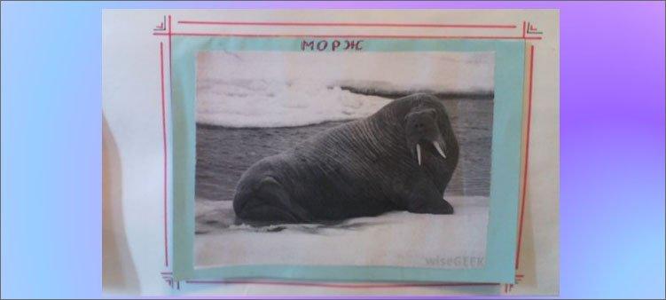 блок-морж-на-плакате