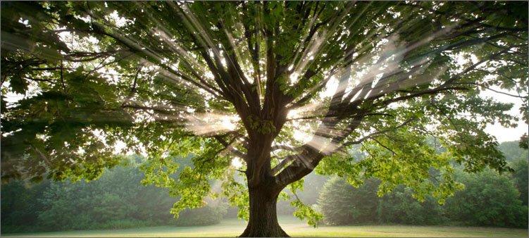 лучи-солнца-пробиваются-сквозь-крону-дерева