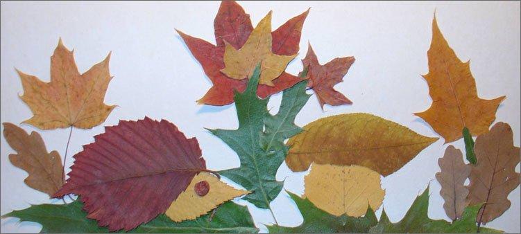 аппликация-из-листьев-ежик