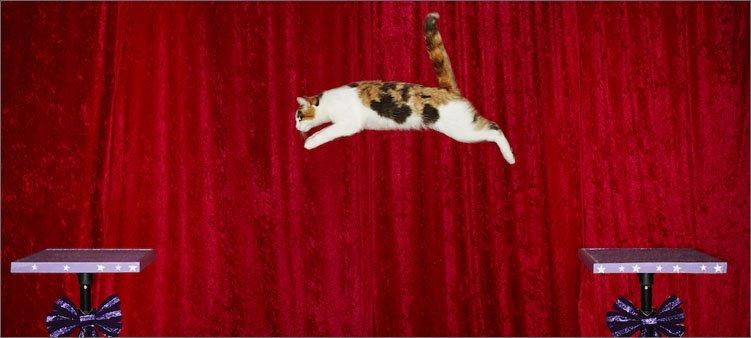 самый-прыгучий-кот