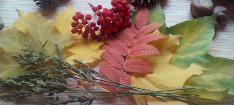 осенние-листья-и-рябина