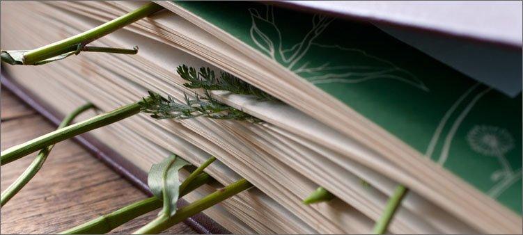 растения-сушат-в-книге