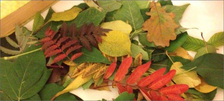 осенние-листья-лежат-в-коробке