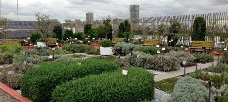ботанический-сад-на-крыше-музея-в-токио