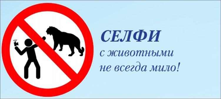 памятка-селфи-с-дикими-животными