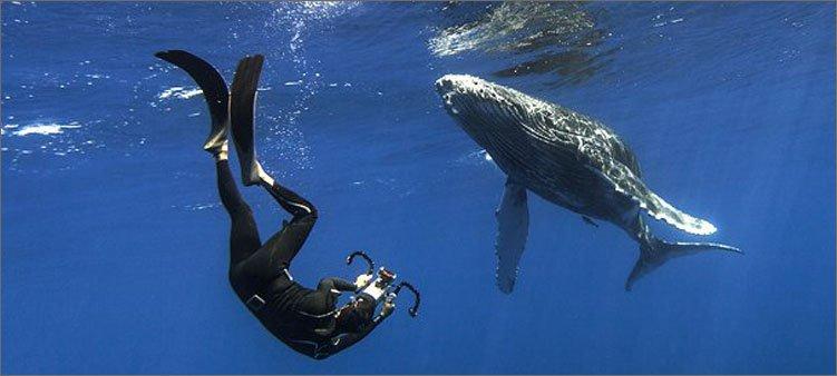 океанолог-фотографирует-кита