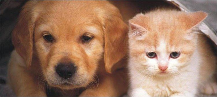 щенок-м-котенок