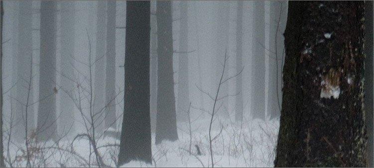 холодная-зима-в-лесу