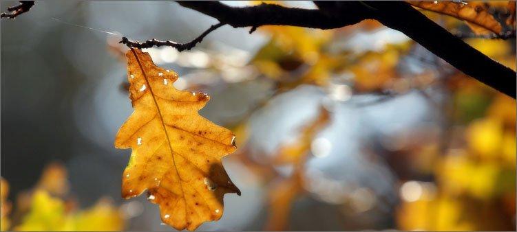 осенний-листочек-на-ветке