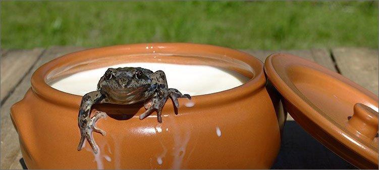 лягушка-в-кринке-с-молоком