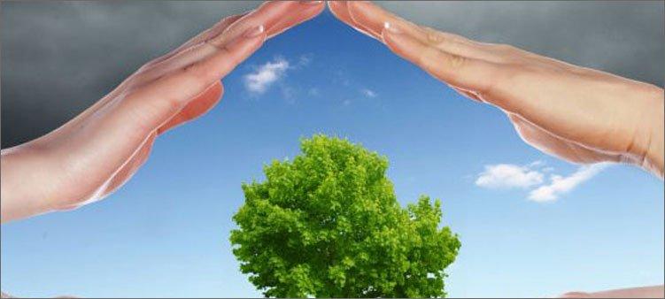 две-руки-защищают-дерево