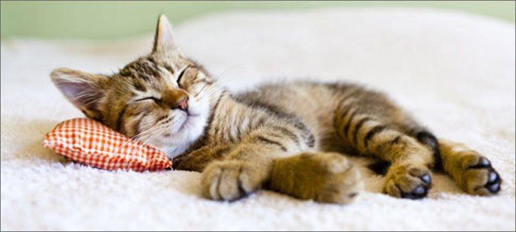 котенок-спит-на-подушке