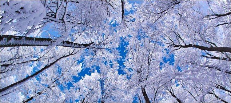 зимний-лес
