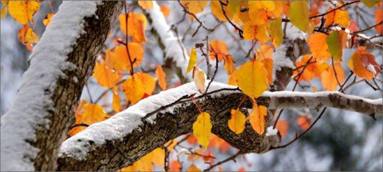 снег-выпал-осенью