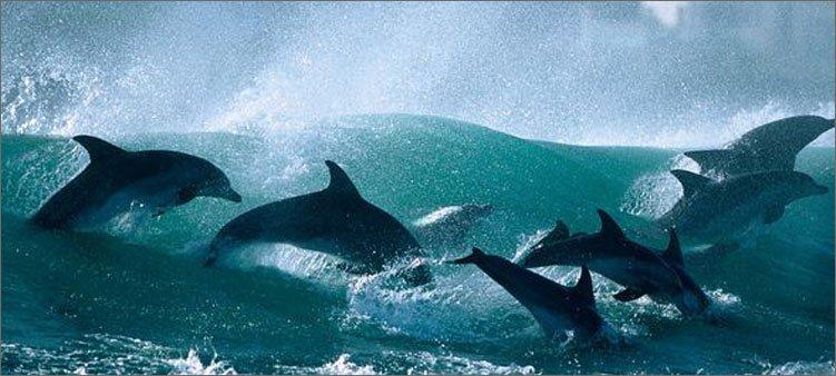 дельфины-в-волнах