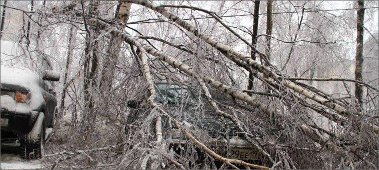 дерево-сломалось-от-гололеда