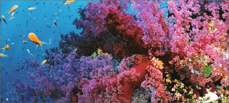 большой-коралловый-риф