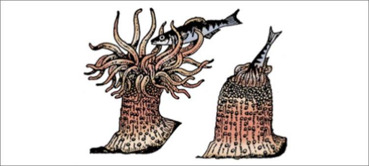 полип-ест-рыбу