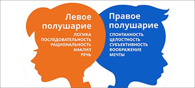 два-полушария-мозга