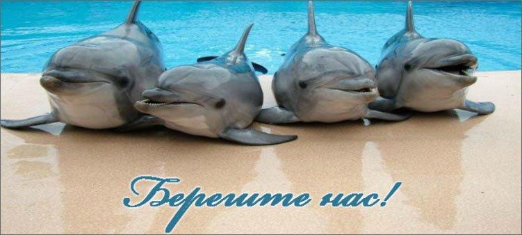 четыре-дельфина