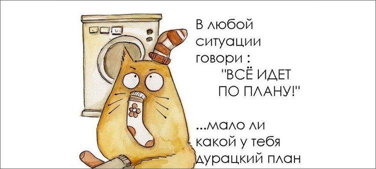 кот-и-планы