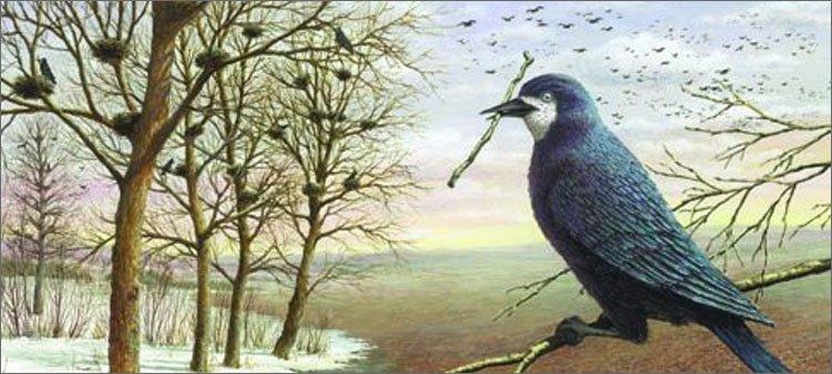 птицы-строят-гнезда