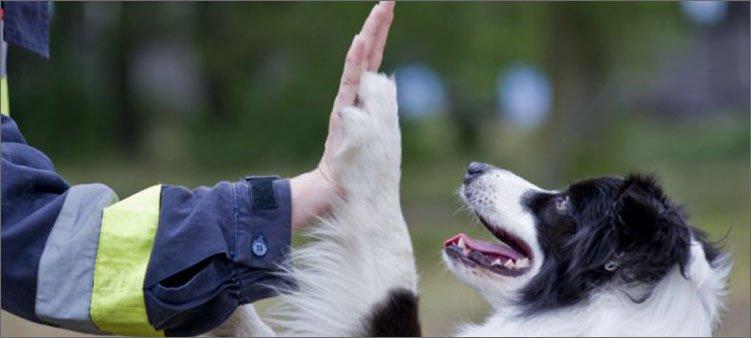 дай-пять-с-собакой