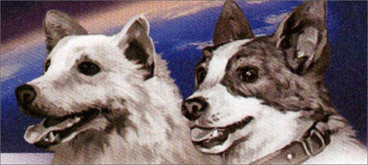 красивые-собаки-космонавты