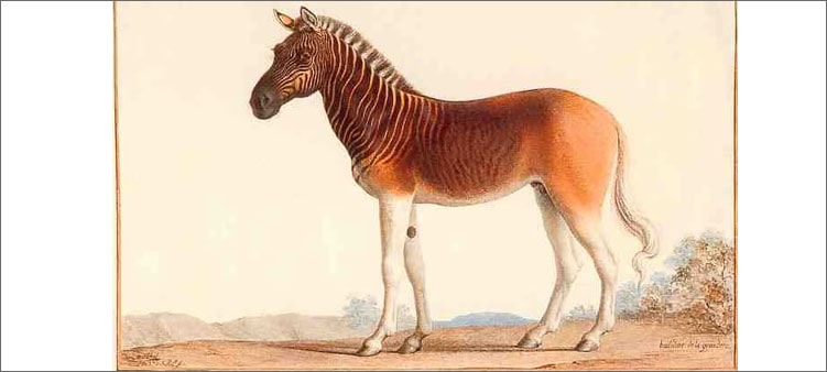 лошадка-квагга