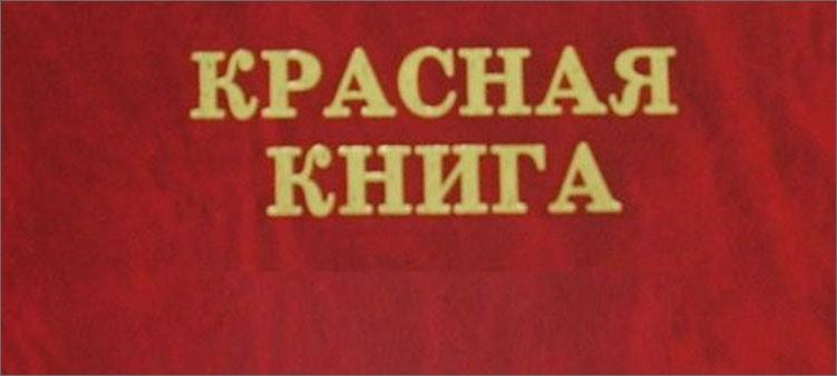 обложка-красной-книги