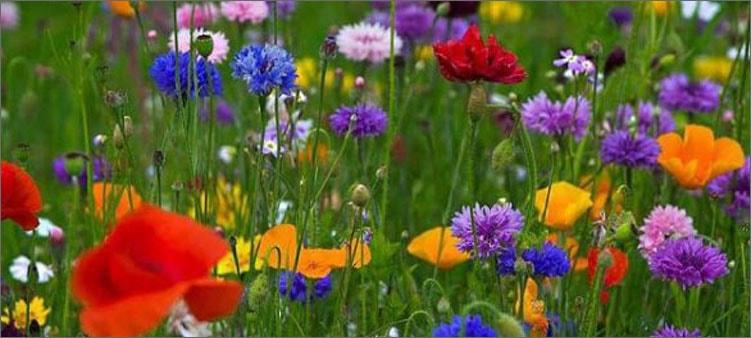 летние-цветы