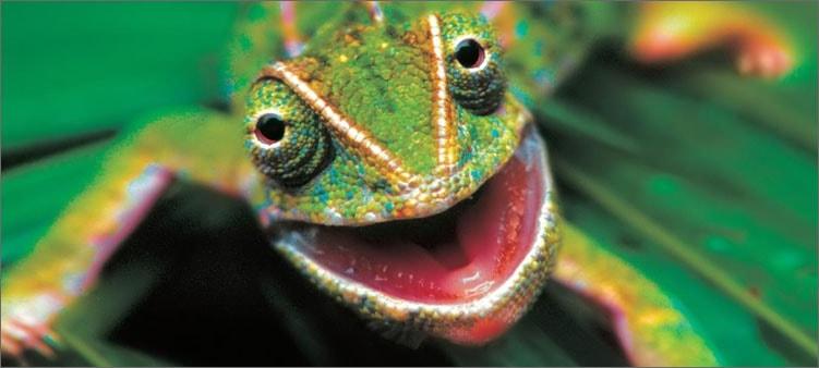 хамелеон-улыбается