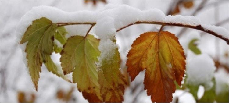 первый-снег-в-октябре