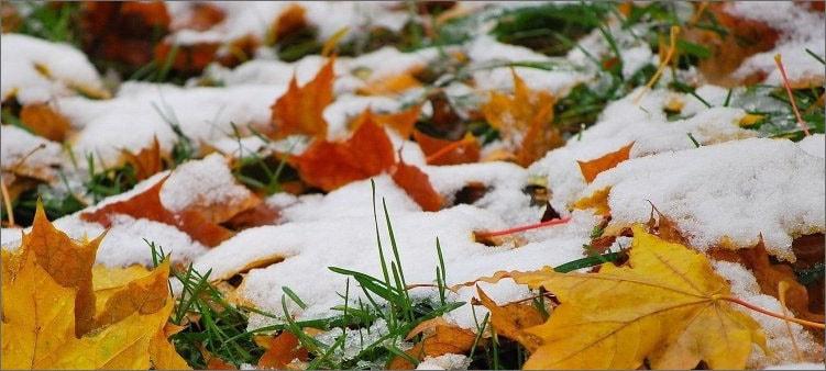 снег-на-осенних-листьях