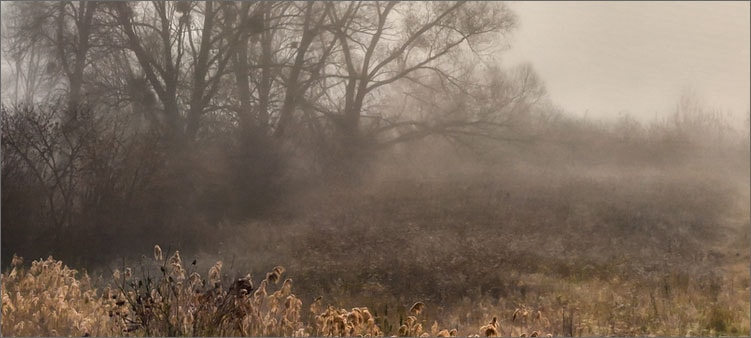 туман-в-ноябре