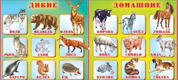 дикие-и-домашние-животные