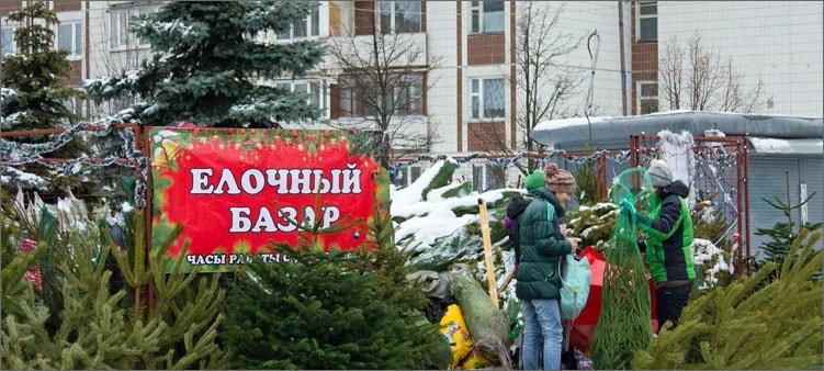 продают-елку