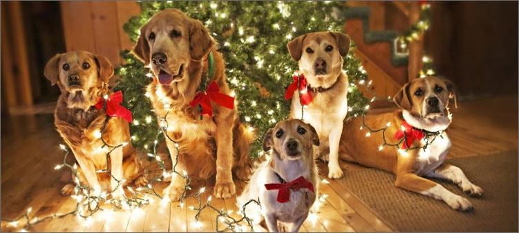 собаки-у-елки