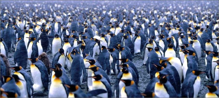 поселение-пингвинов