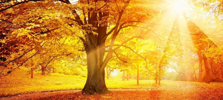 золотая-осень